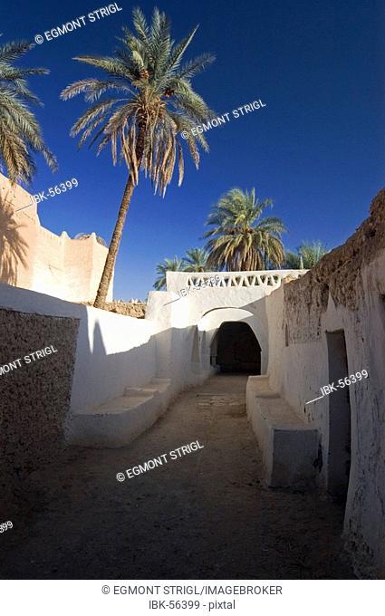 Palm garden of Ghadames, Ghadamis, Unesco world heritage site, Libya