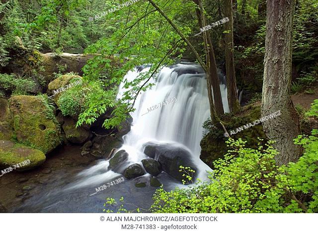 Whatcom Falls, Bellingham, Washington, USA