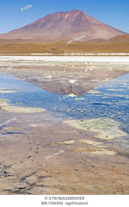 Laguna Hedionda, Stinking Lake, Altiplano shallow salt lake, Potosi, Bolivia, South America