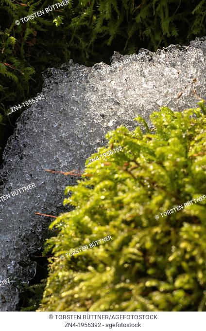 Line of Melting Snow Inside a Mossy Sourrounding. Austria