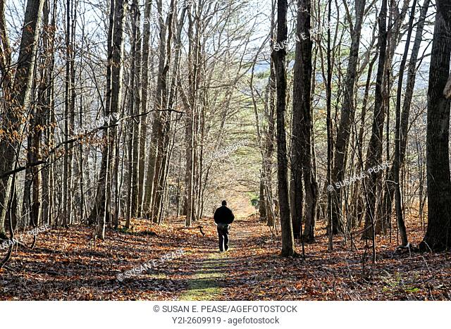 A man walks down a path within the Mohawk Trail State Forest, Massachusetts, United States, North America