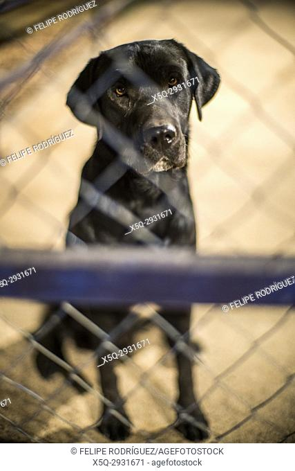 Dog behind a fence, Spain