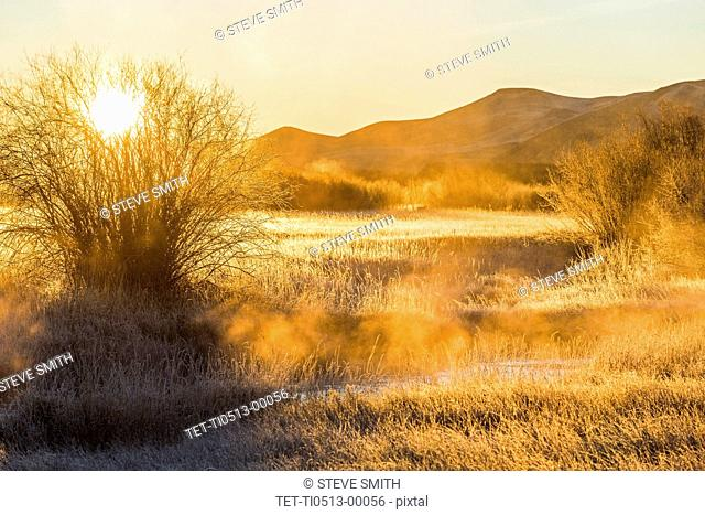 Sunrise over field in Picabo, Idaho