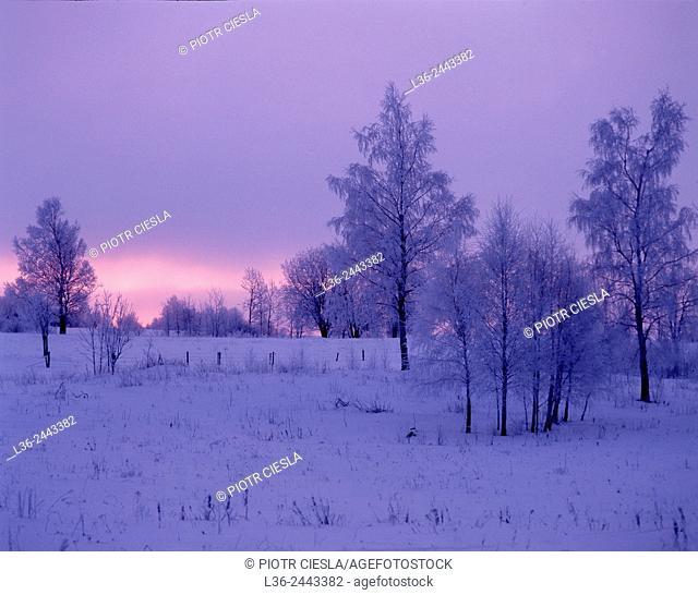 Winter morning, Suwalski region, Poland