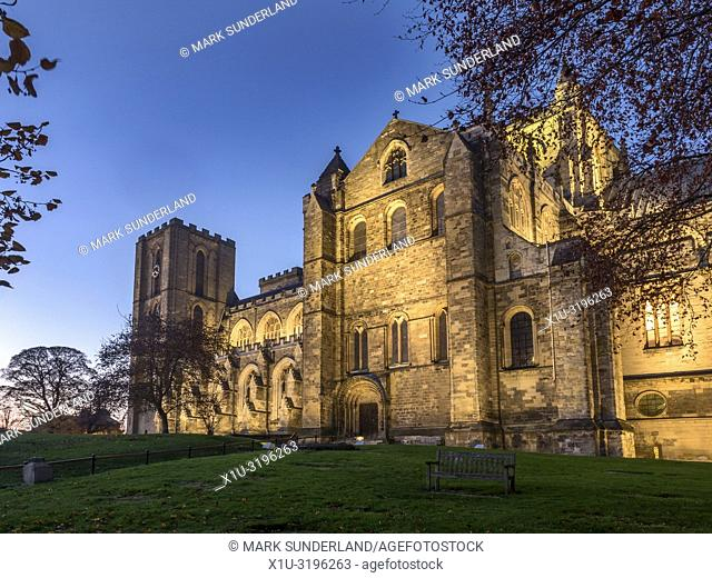 Ripon Cathedral floodlit at dusk in autumn Ripon North Yorkshire England
