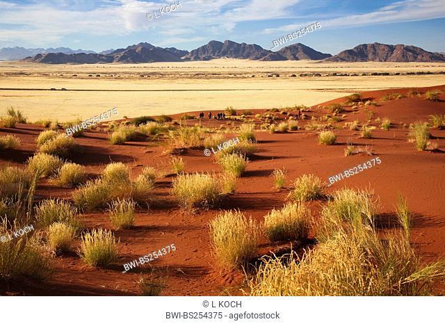 grasses in Namib desert, Namibia, Namibrand