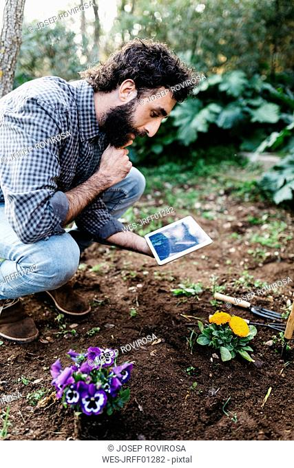 Man taking photographs with a tablet of flowers planted in garden