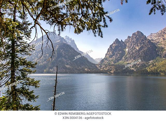 Pine tree slightly obscures the serene landscape of Teton Mountain Range on the water, Grand Tetons National Park, Teton County, Wyoming. USA