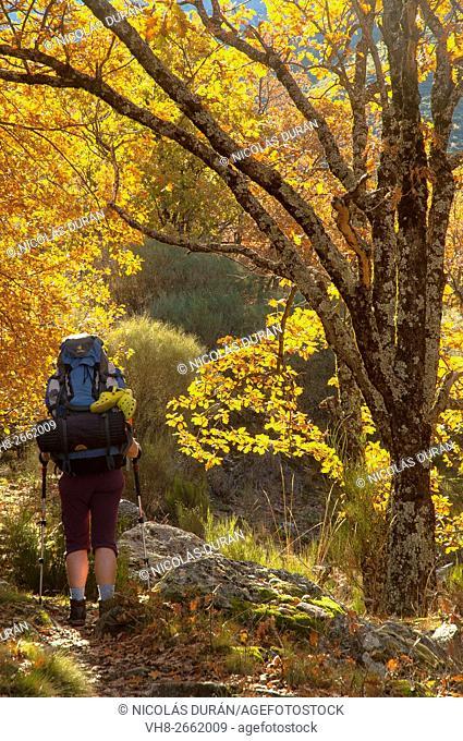 Hiking in the Sierra de Gredos, Parque regional de la Sierra de Gredos, Spain