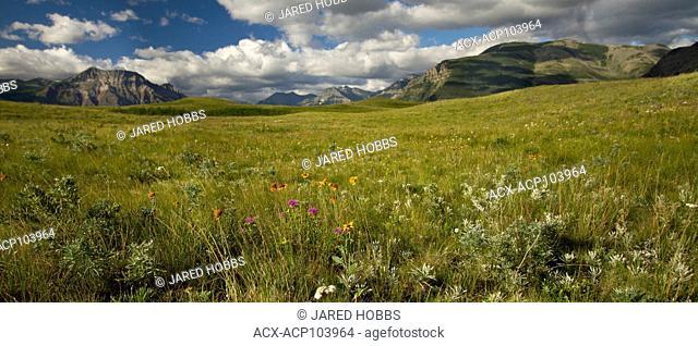 Bison Paddock, Waterton, Grasslands, Alberta, Canada