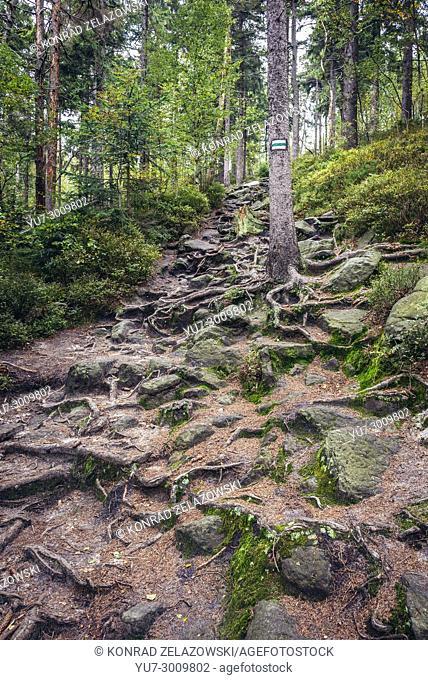 Tourist trail to Naroznik Mountain in Stolowe Mountains (Table Mountains) range, part of the Sudetes, Lower Silesian Voivodeship of Poland