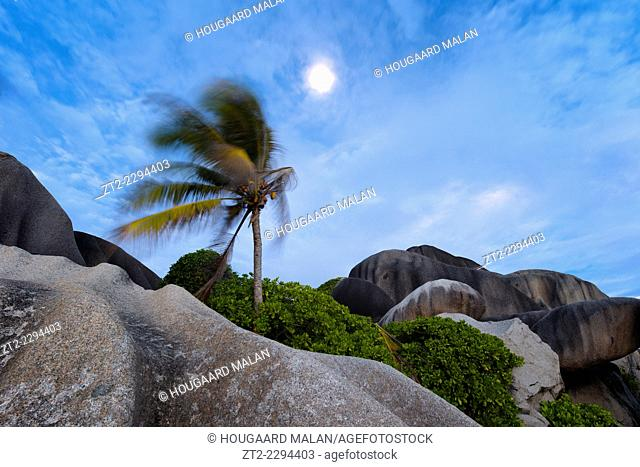Landscape view of a palm bending in the wind below a full moon. La Digue Island, Seychelles
