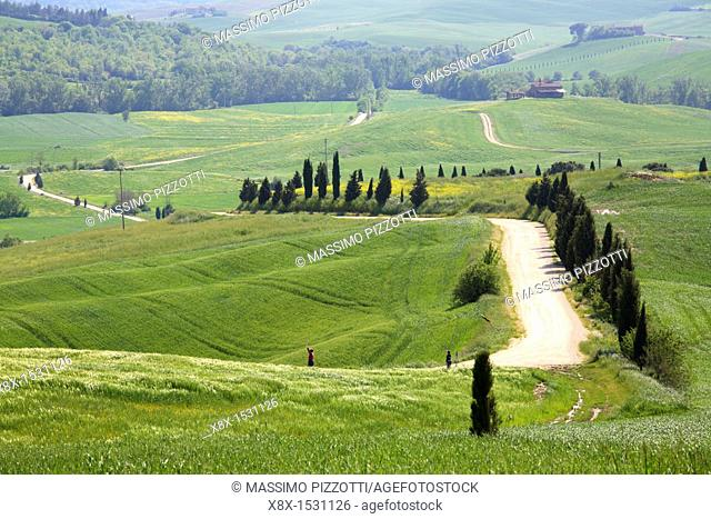 Dirt road in Val d'Orcia, Tuscany, Italy