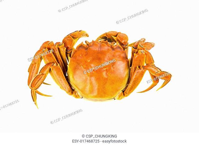 cooked crab closeup