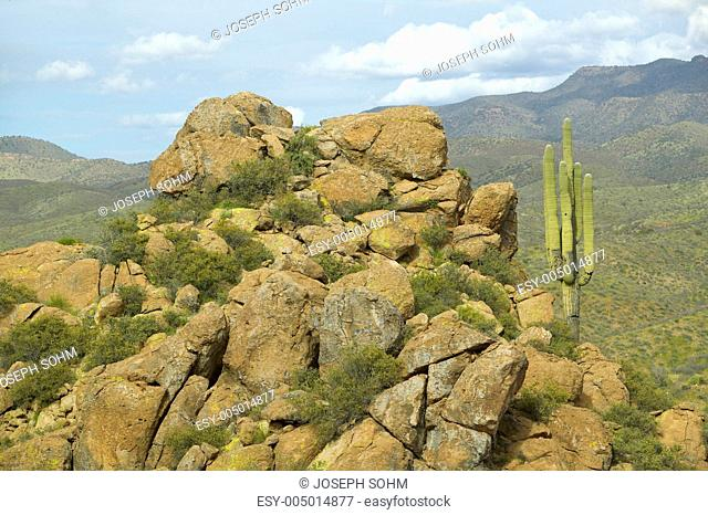 Saguaro cactus and hillside with mountains in background off Route 89 in the Superstition Mountains east of Phoenix, AZ
