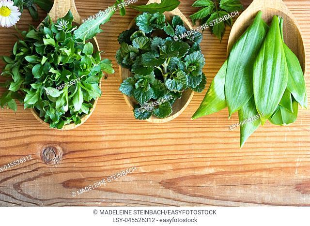 Fresh wild edible spring herbs on three wooden spoons: chickweed, ground-ivy, wild garlic, daisy, dandelion, ground elder