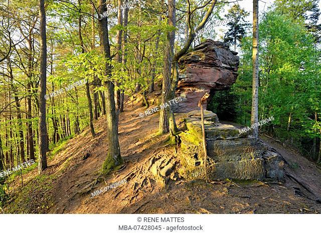 France, Bas Rhin, Lembach, hiking path near Fleckenstein castle ruins, path of the rocks