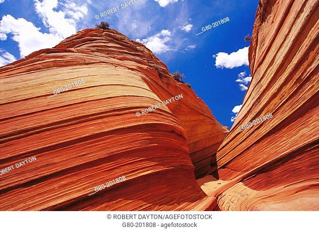 Petrified sand dunes. Paria Canyon-Vermilion Cliffs Wilderness. Arizona. USA