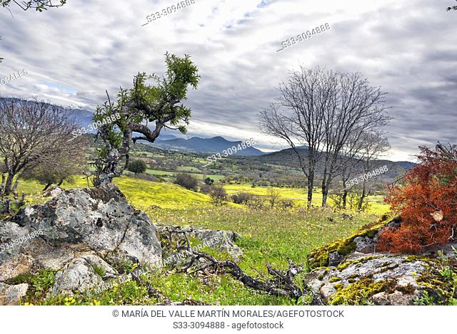 Spring at the meadows of Higuera de las Dueñas and Sierra de Gredos and Cenicientos cliff on the background. Avila. Spain