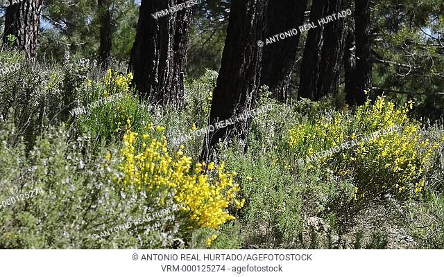 Calares natural park. Albacete province. Spain