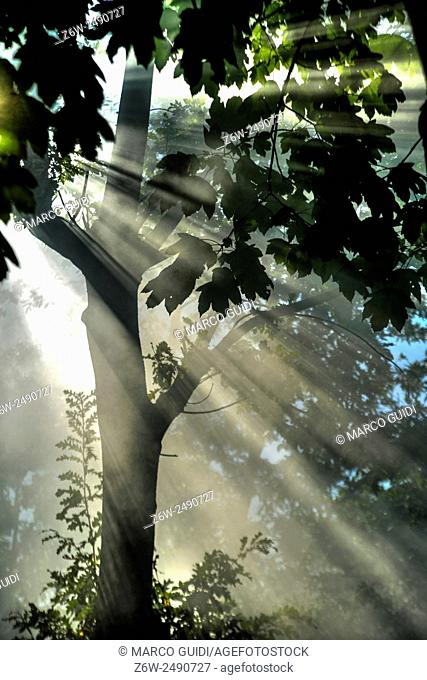 The effects that make the sun's rays at dawn in the woods