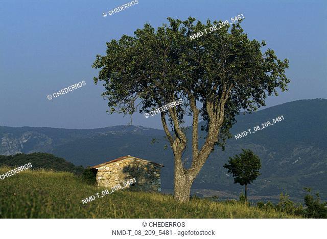 Tree on a landscape, Provence, France