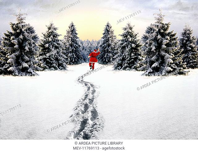Father Chritmas skipping in Snow - footprints & conifers in winter landscape star Digital Mainpulation: Father Christmas SG Footprints & background ME Father...