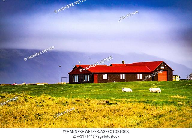 Farm in the nature of Snaefellsnes peninsula, Iceland