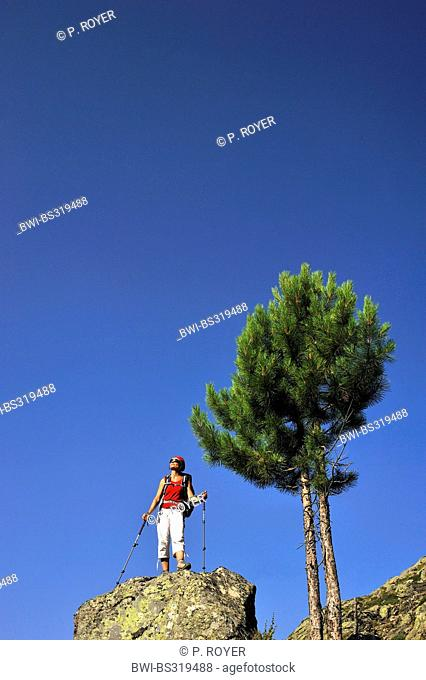 aleppo pine (Pinus halepensis), female wanderer standing on a rock and enjoying the view, France, Corsica, Pietra Piana