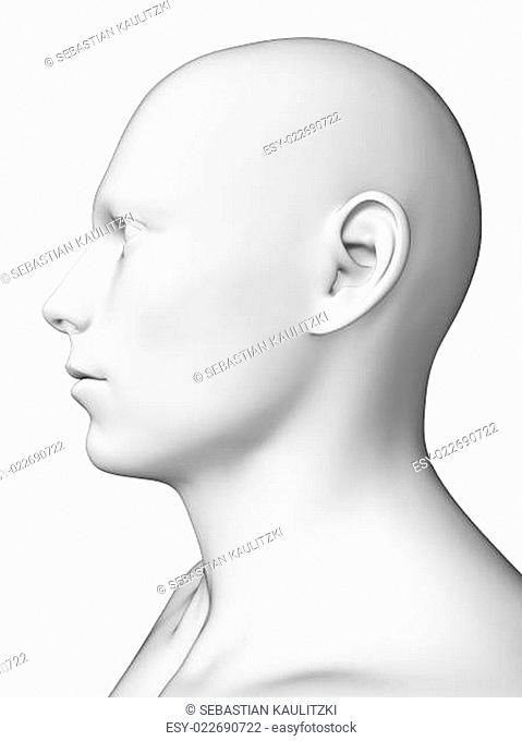 3d rendered illustration - white male head