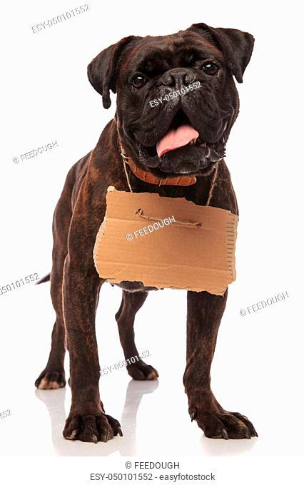 Eating boxer puppies Stock Photos and Images | age fotostock