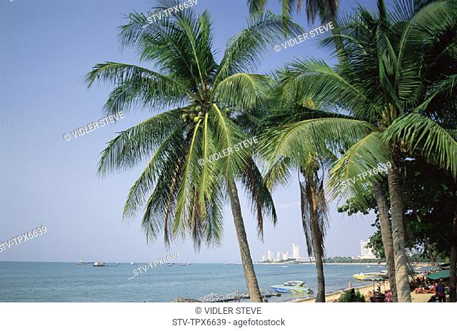 Asia, Beach, Destination, Holiday, Landmark, Palm trees, Pattaya, Resort, Sand, Sea, Thailand, Tourism, Travel, Vacation