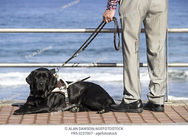 Visually impaired elderly man with black Labrador guide dog overlooking the sea in Las Palmas on Gran Canaria, Canary Islands, Spain