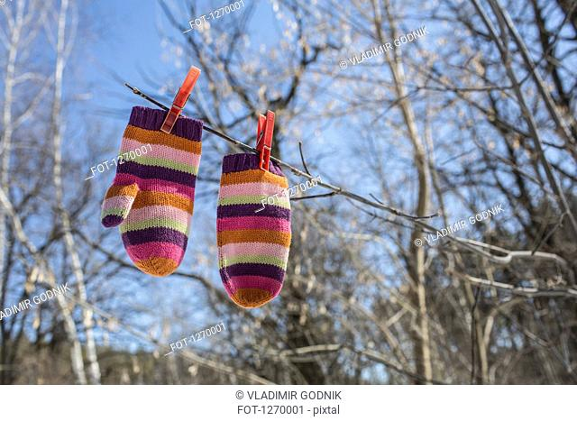 Pair of striped mittens pegged to branch