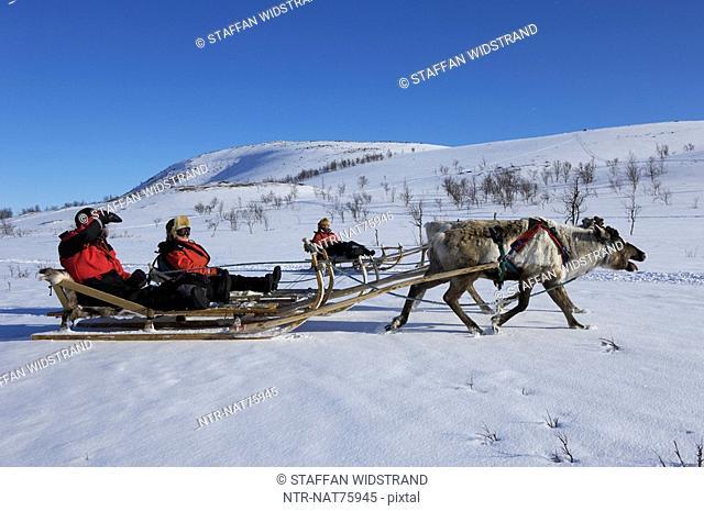 Reindeer sledding ecotourism tour, Sweden