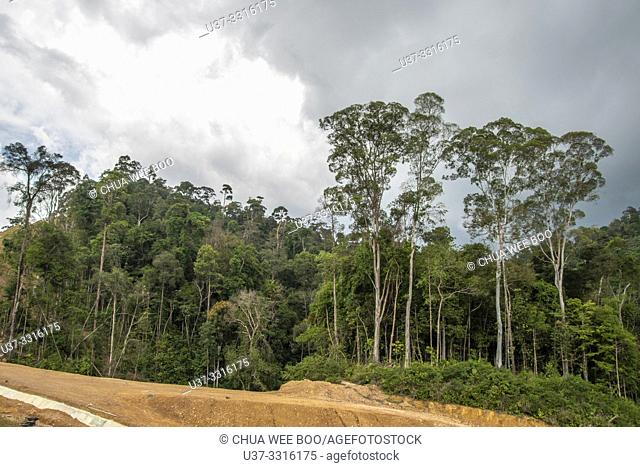 Trees along the highway of Telok Melano, Sematan, Sarawak, Malaysia