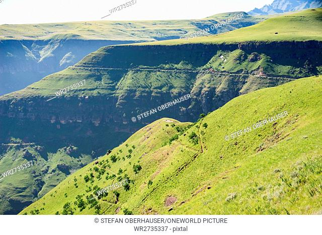 South Africa, KwaZulu-Natal, Giants Castle Game Reserve, Hiking at the Cathedral Peak in the Drakensberg Mountains, Greenery at sunshine