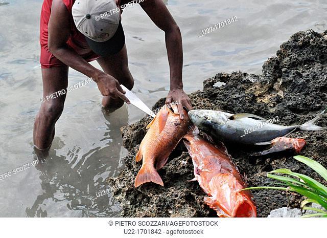 San Blás Panama: a fisherman cleaning fishes at Yandup Lodge, on a little island of Kuna Yala