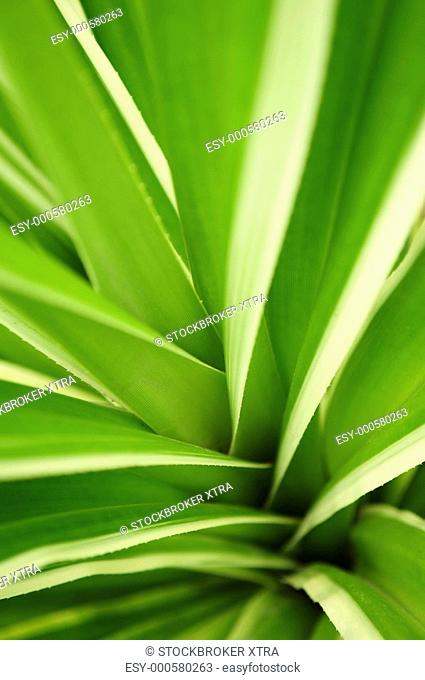 Close up on green leaves of tropical plant