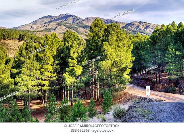 Peña la Cabra, Sierra Norte. Madrid province, Spain