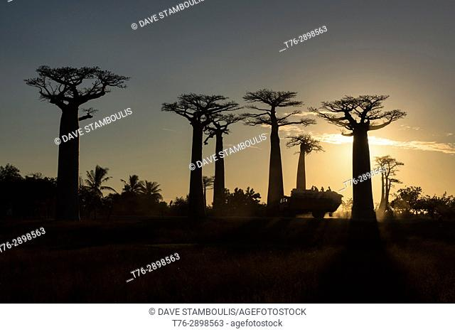 Truck at sunset on the Avenue of the Baobabs, Madagascar