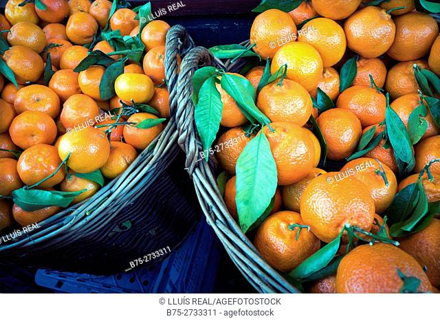 Two wicker baskets full of oranges. London, England