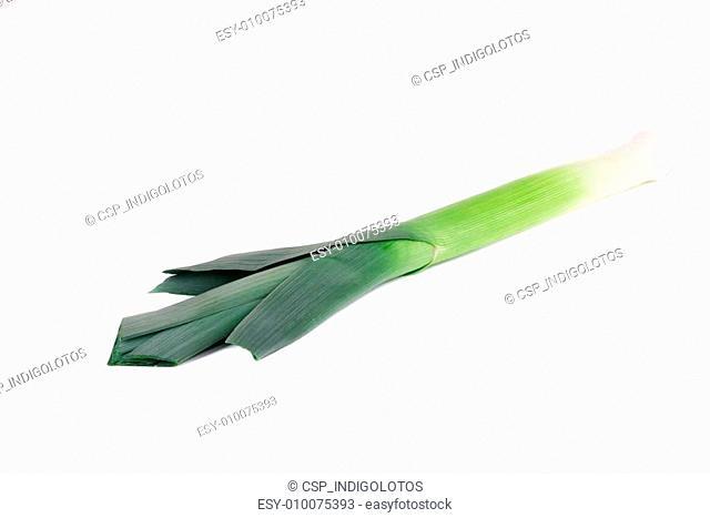 Large welsh green leek
