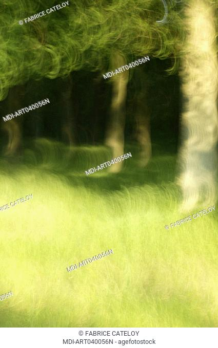 Green color symphony in the Senart forest in Essonne