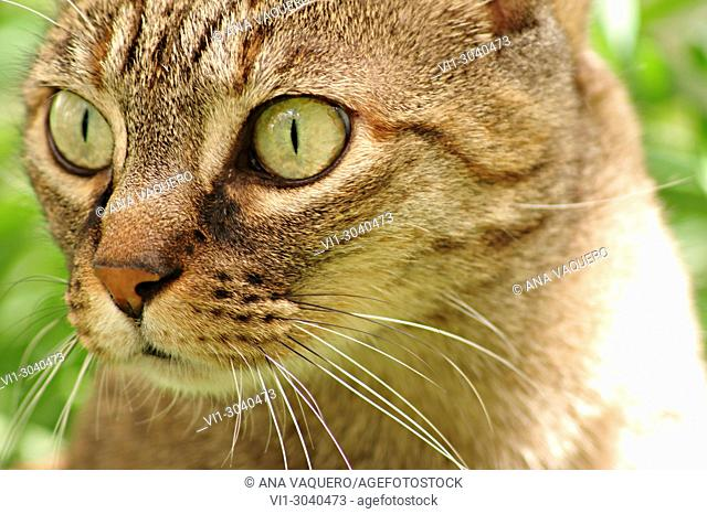 The feline look, Miajadas, Cáceres, Estremadura