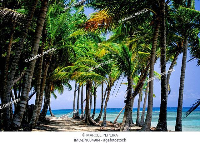 Dominican republic, Las Terranas, beach