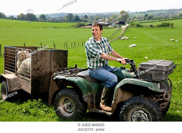 Shepherd riding tractor pulling trailer with sheep in field