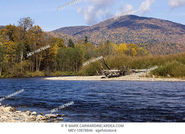Taiga Forest and river . 600 miles north of Vladivostok - Russian Far East