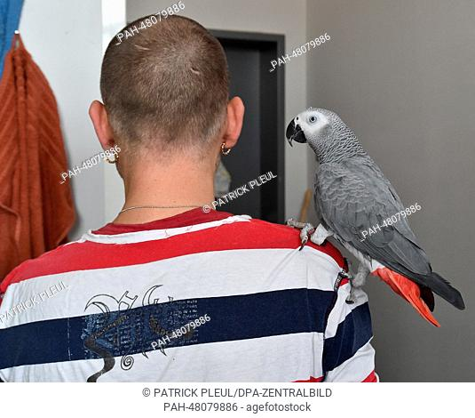 An inmate with his parrot is pictured in his living area of the preventive detention section of prison JVA Brandenburg in Brandenbrug and der Havel, Germany