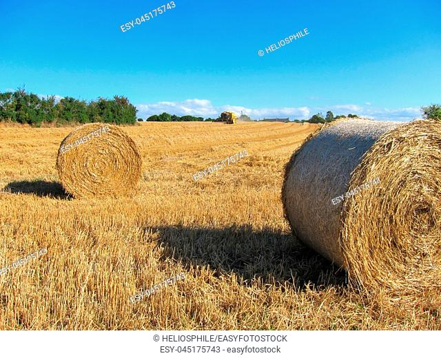 Round straw bales in harvested fields in Brittany
